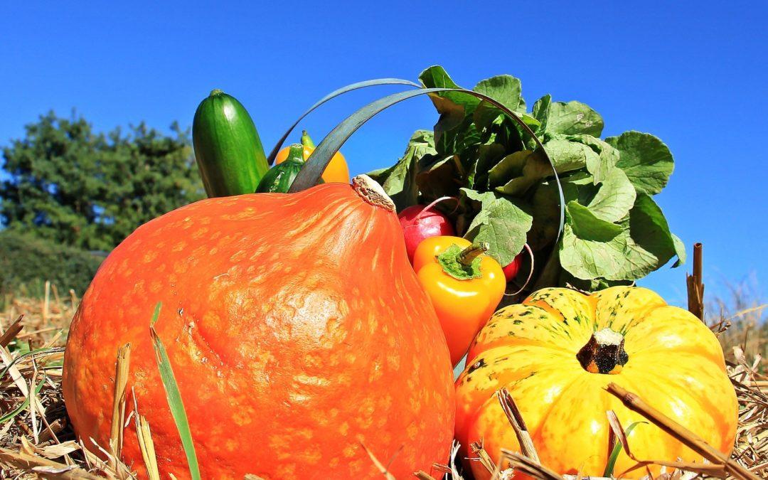 Agrilocal : le vrai goût du terroir en un clic